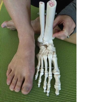 foot-skeleton-sq